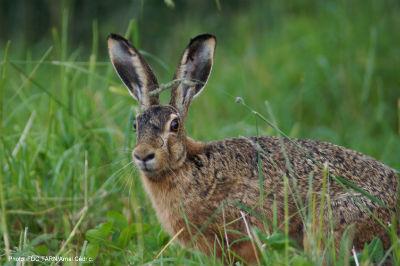 Les chasseurs plaident pour une fin programmée des pesticides et herbicides toxiques